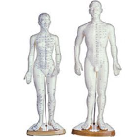 acupuncture-manikins.jpg