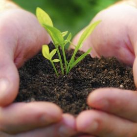 Seedling-in-human-hands.jpg
