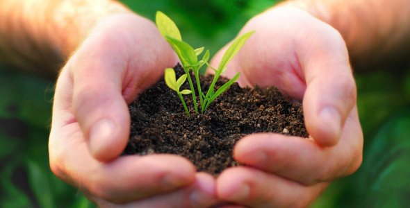 Seedling in human hands